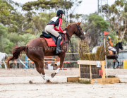 horse-CW-0261-_CLW6812