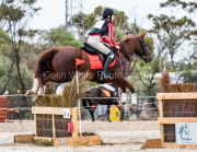 horse-CW-0263-_CLW6814