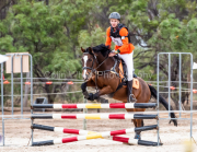 horse-CW-0267-_CLW6820