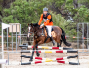 horse-CW-0268-_CLW6821