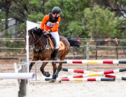 horse-CW-0270-_CLW6823