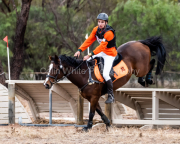 horse-CW-0276-_CLW6835