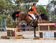 horse-CW-0282-_CLW6844