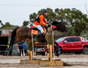 horse-CW-0285-_CLW6848