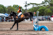 horse-CW-0290-_CLW6854
