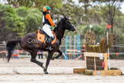 horse-CW-0302-_CLW6889