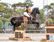 horse-CW-0304-_CLW6891