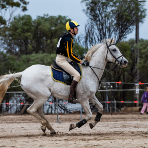 horse-CW-0052-_CLW6541
